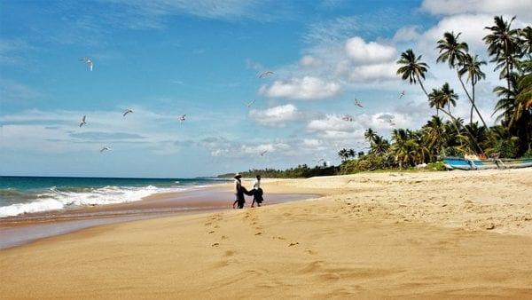 playa-con-palmeras
