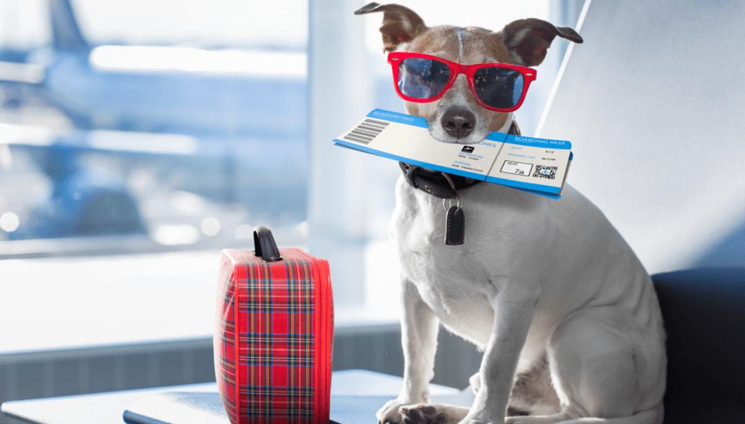Consejos para viajar en avión con un perro